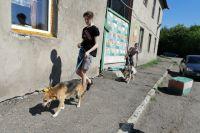 Волонтёры ежедневно приезжают в приют, чтобы погулять с собаками.
