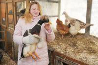Домашнюю птицу следует содержать в загоне, чтобы не контактировала с дикой.