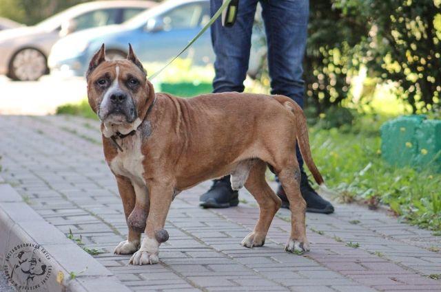 На теле собаки нашли несколько опухолей.