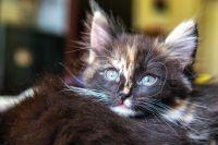 В Тюмени изолировали домашнюю кошку, заболевшую коронавирусом