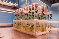 В аграрном университете открылась лаборатория по микроклональному размножению растений.