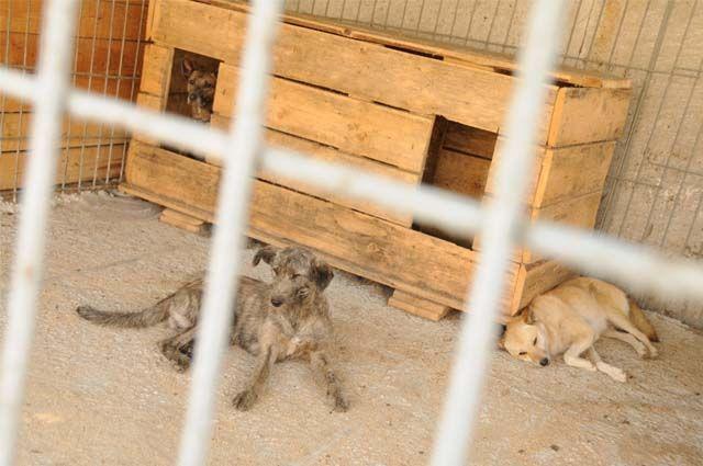 Зоозащитники считают, что в учреждении жестоко обращаются с четвероногими.