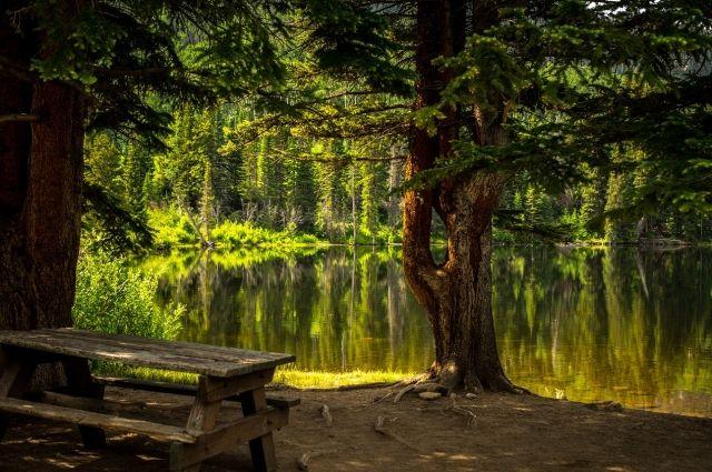 В Салехарде предлагают создать арт-парк «Таинственный лес»
