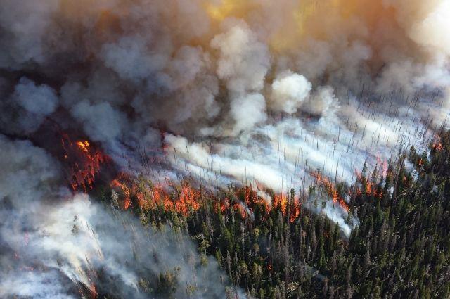 Площадь лесных пожаров в Уватском районе превысила 200 гектаров