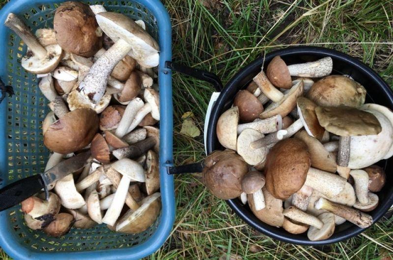 Коктейль из подберезовиков, белых грибов, подосиновиков