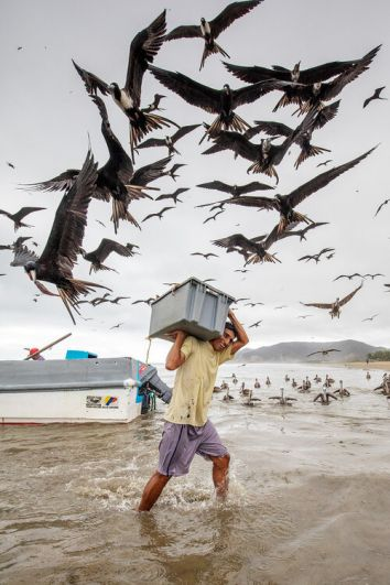 Один из самых комментируемых снимков конкурса, участник категории «Садовые и городские птицы».