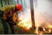 На территория края введен режим ЧС в лесах.