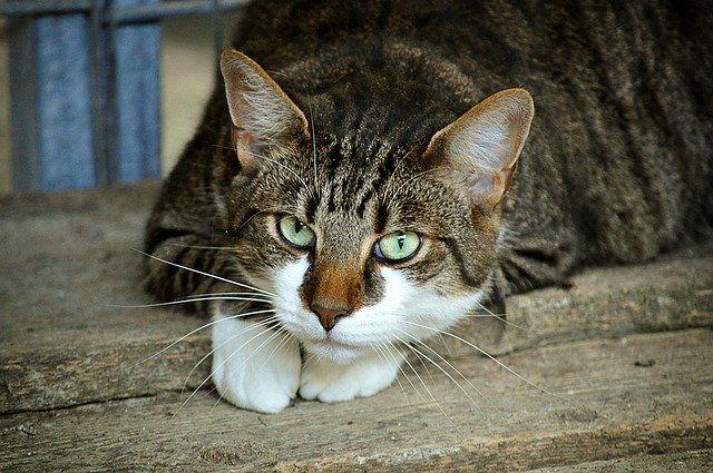 Тюменцам рассказали, как ухаживать за шерстью домашней кошки