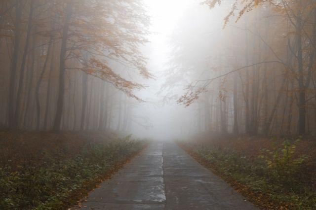 Трассы Оренбуржья станут более опасными из-за тумана