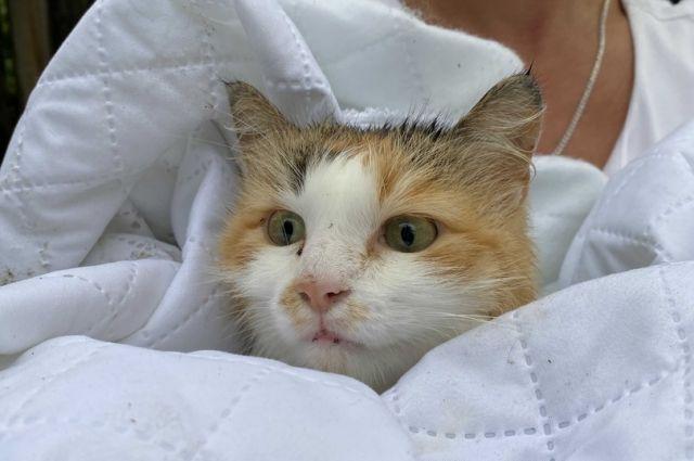 После обследования кошке будут искать любящих хозяев.