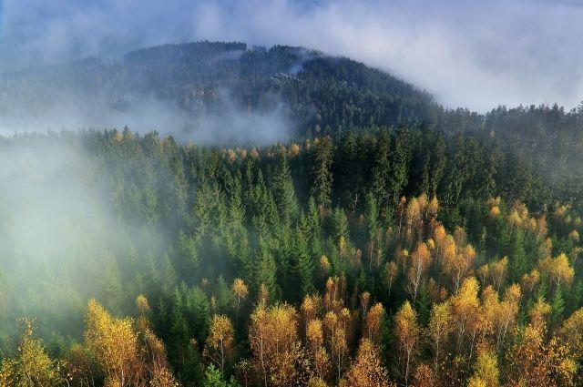 С начала года в Тюменской области ликвидировали 213 лесных пожаров