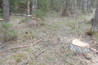 В Оренбуржье прокуратура разбирается с незаконной вырубкой леса в Татарской Каргале