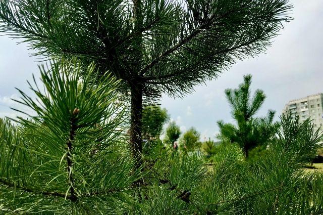 Проект по озеленению стартовал 25 августа.