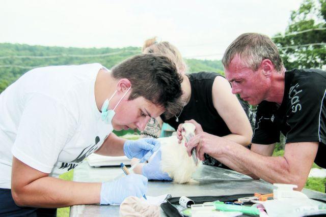 Экологи проверили состояние птенцов перед выпуском на волю.