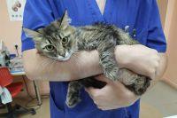 Одна из четырёх спасённых кошек