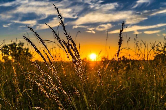 В Перми 29 августа температура воздуха днём повысится до +25…+27°.