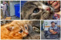 В Тюмени экипаж мусоровоза спас выброшенных котят