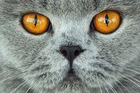 Эксперты доказали лечебные способности кошек