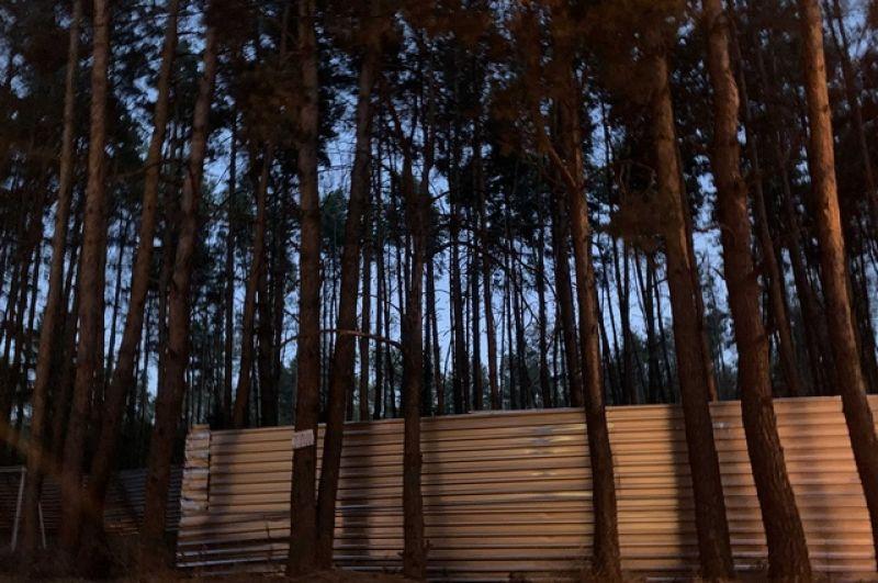 На территории Северного леса был незаконно установлен забор