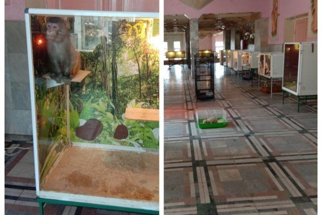 В передвижной выставке участвуют обезьяны, крокодилы, рептилии, грызуны.