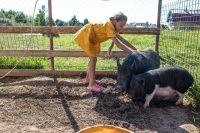 Главная задача фестиваля «Сыр и пряник» - привлечь внимание к проблемам псковских фермеров и ремесленников и прорекламировать их продукцию