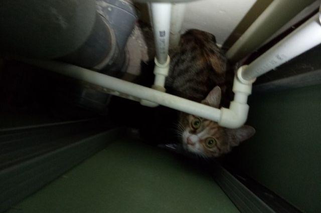 Котят передали жителям дома.