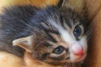 Почти все котята, найденные экипажем мусоровоза в Тюмени, обрели новый дом