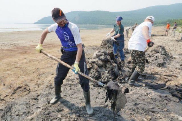 Сгнившую спирогиру нужно физически собирать с берегов озера, пока она не стала «обедом» для будущих поколений ненужной водоросли.