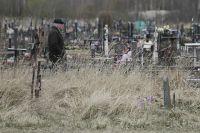 Специалисты подрядчика, которого определили в ходе аукциона, уже начали инвентаризацию могил.