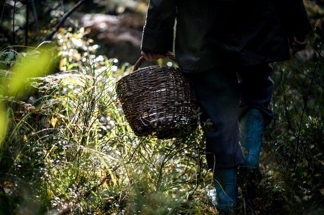 Чаще в лесу теряются люди, которые самоуверенно говорят: «Да вы что, я в этот лес с детства хожу».
