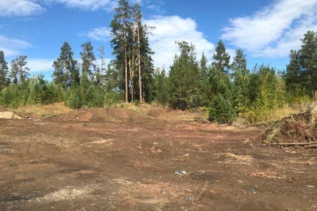 Сейчас участок городских лесов полностью очистили.