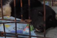 Догхантеру грозит уголовное дело за жестокое обращение с животными.