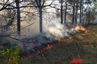 В Оренбуржье три очевидца тушили природный пожар, пока ждали приезда специалистов.