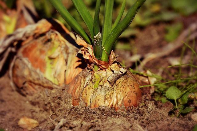 Тюменские дачники собрали урожай