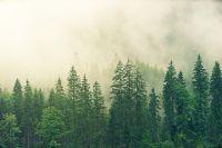 Тюменцам рассказали, что делать, если заблудился в лесу