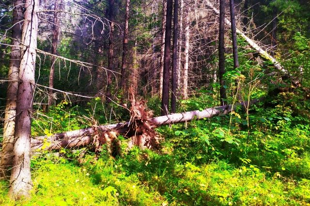 Искать мужчину будут в лесу.