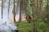 Министерство лесного хозяйства края значительно увеличило группировку лесопожарных формирований, привлекались авиапожарные из других регионов.