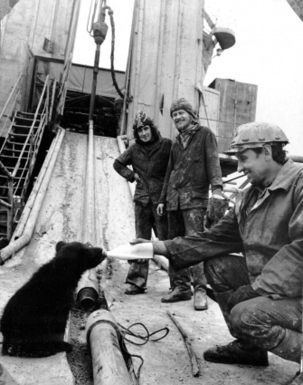 Рабочие буровой бригады во время кормления медвежонка молоком из бутылки. 1980 год.