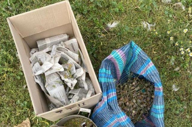 В Харьковской области мужчина выращивал более 200 кустов конопли