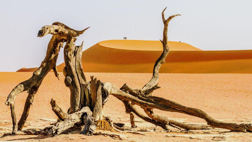 В национальном парке Намиб-Науклуфт в Намибии.