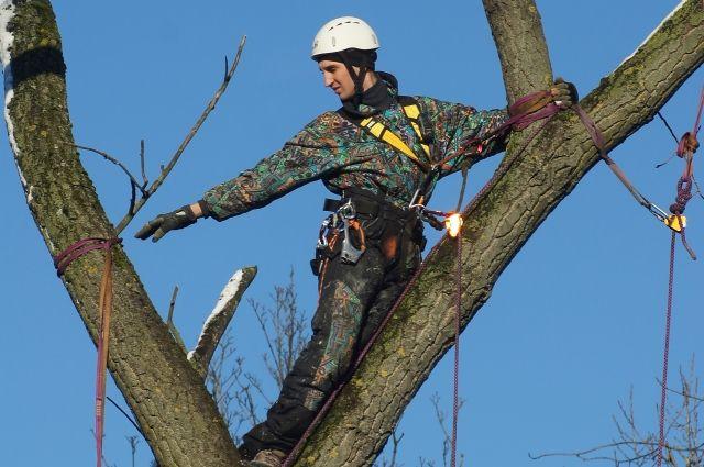 Суд признал проведенную мэрией Оренбурга вырубку деревьев незаконной.