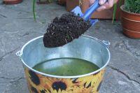 В воде разведите компост и удобрение с полезными микроорганизмами.
