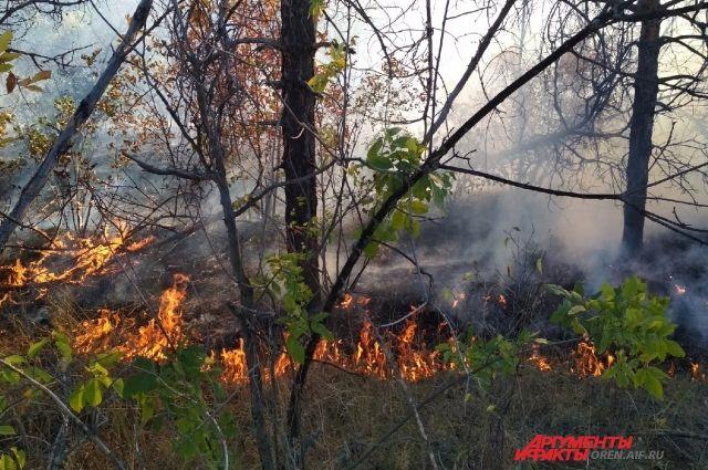 Девятнадцати районам Оренбургской области угрожают природные пожары.