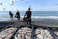 Даже когда уловы растут, ситуация нарыбных прилавках неменяется принципиально.