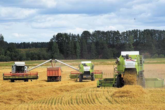 Тюменский район занимает второе место в регионе по темпам уборки зерна