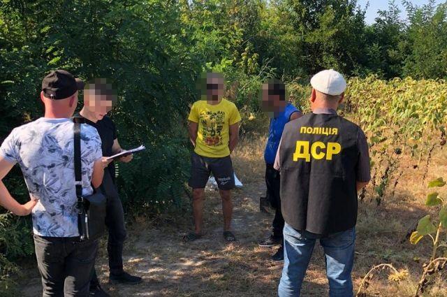 Запорожские полицейские обнаружили посевы конопли стоимостью 10 млн грн