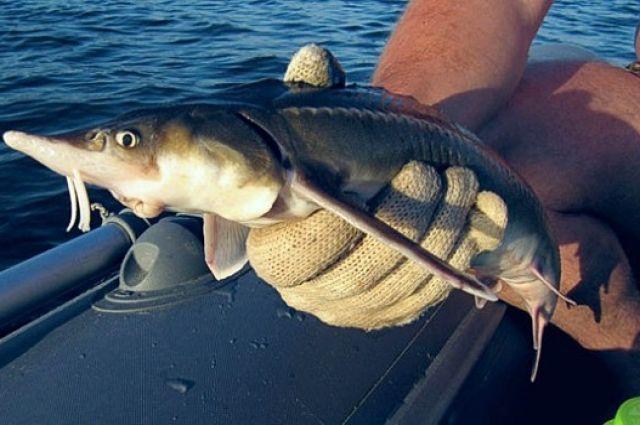 7 из 9 рыб были отпущены в воду.
