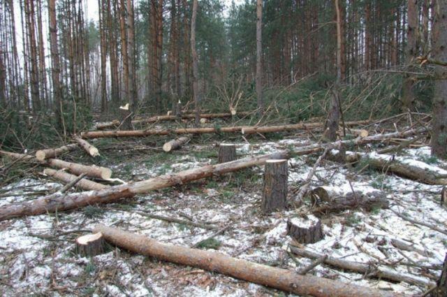 Рыночная стоимость леса составила более 700 тысяч рублей.