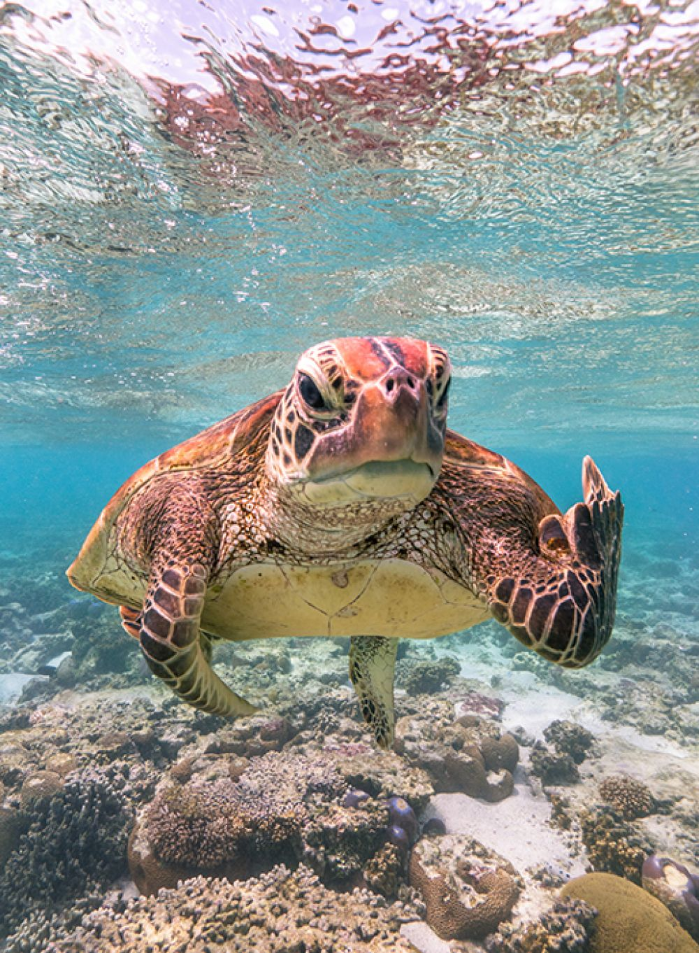 Морская черепаха.