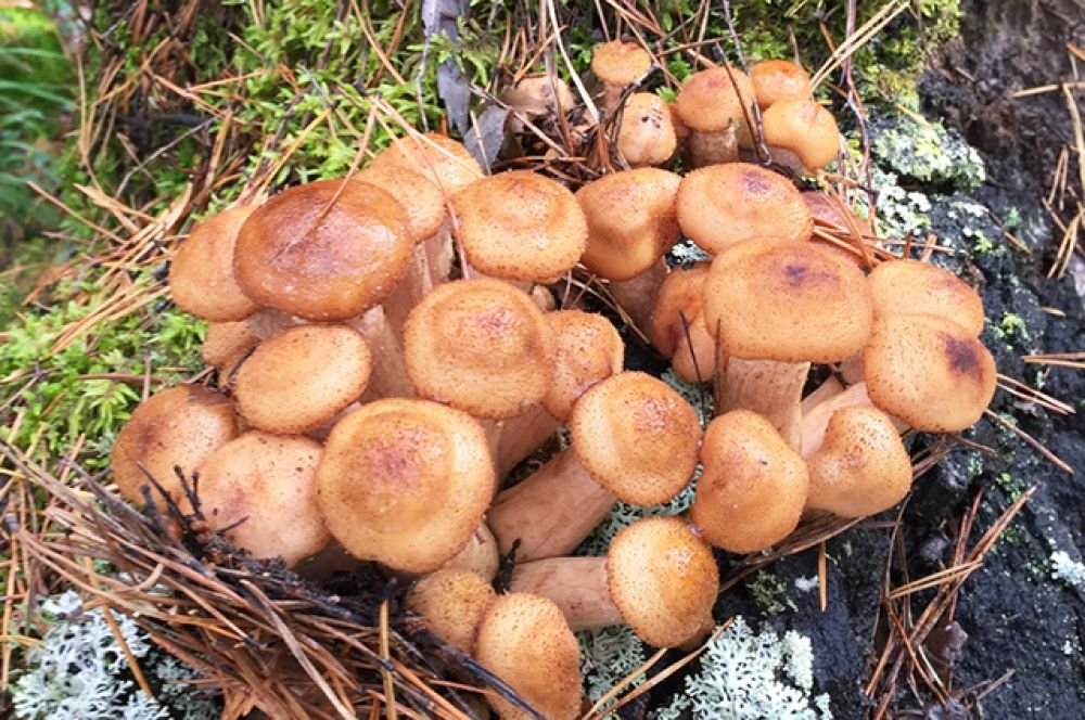 Радует нынешняя пора и грибников. По их словам, грибов в этом году уродилось ни на одну корзинку.